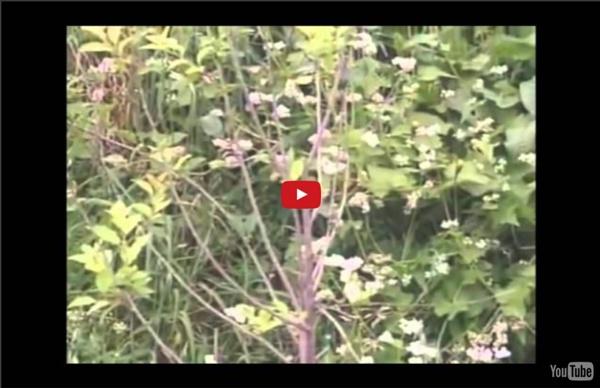 La permaculture, lart de vivre avec la nature