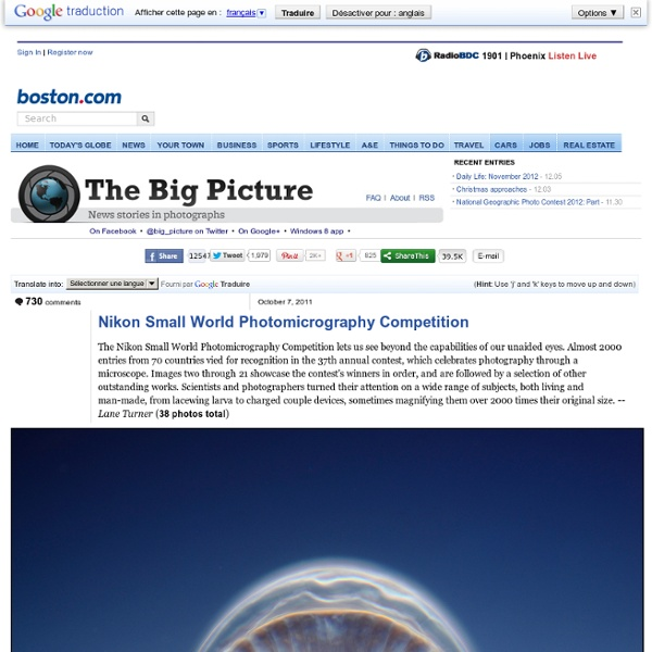 Nikon Small World Photomicrography Competition