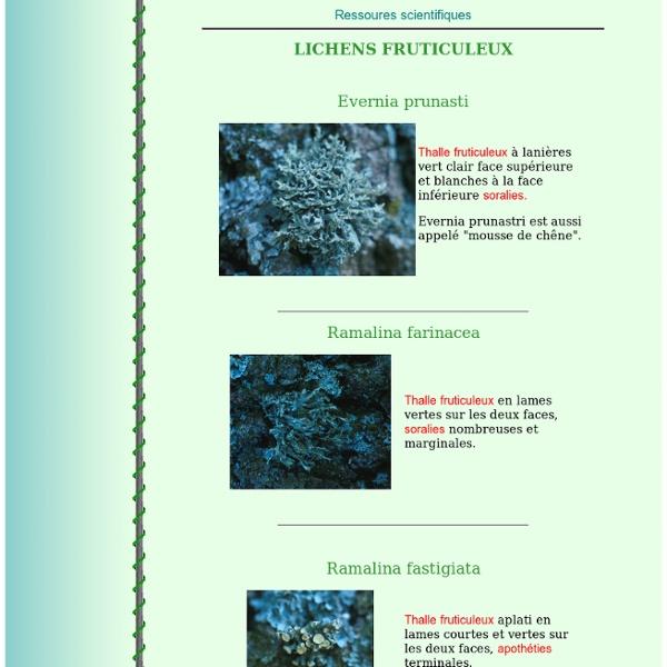 Photos lichens