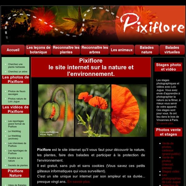 Pixiflore accueil: le magazine internet d et de l'environnement