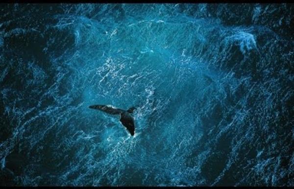 Planète Océan [FR] Yann Arthus-Bertrand - le film Full HD