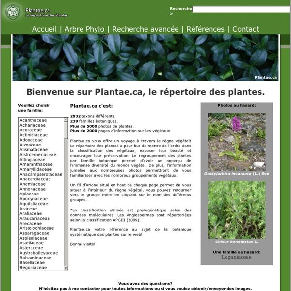 Plantae, Botanique systématique des plantes du monde.