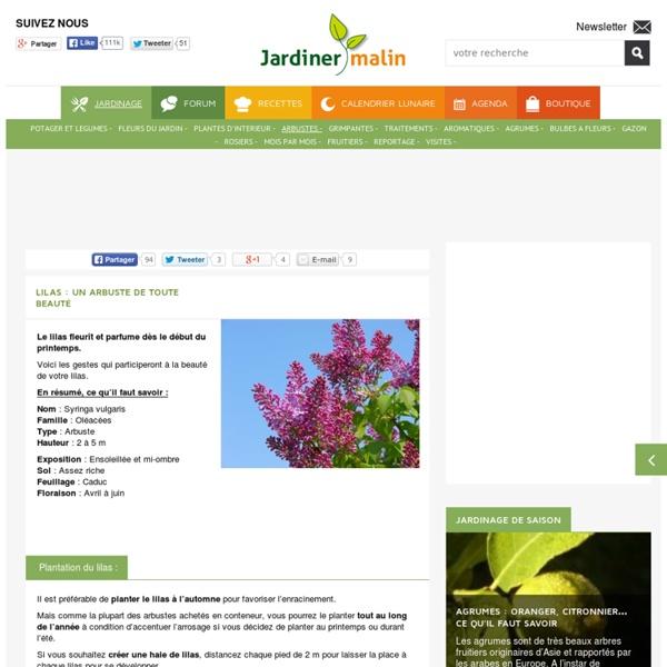 Lilas : plantation, taille et conseils d'entretien