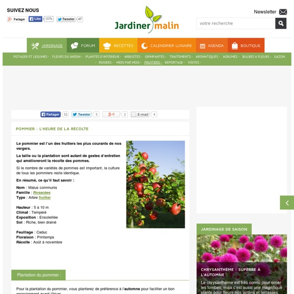 Pommier : plantation, taille et maladies