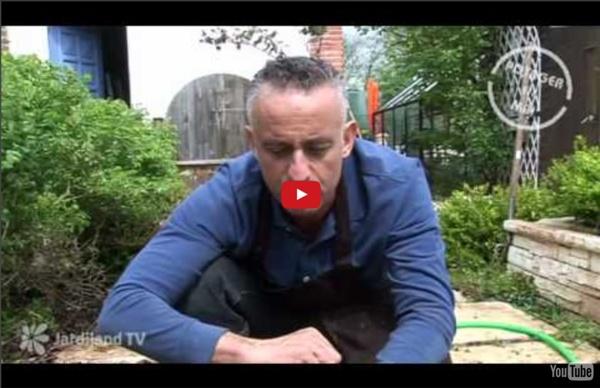 Planter votre potager : étapes et astuces - Jardiland TV - le grand jardin n°3 - 3