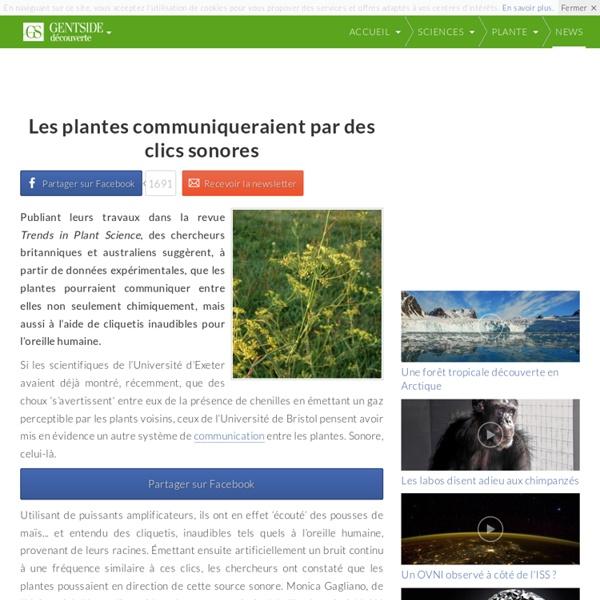 Les plantes communiqueraient par des clics sonores
