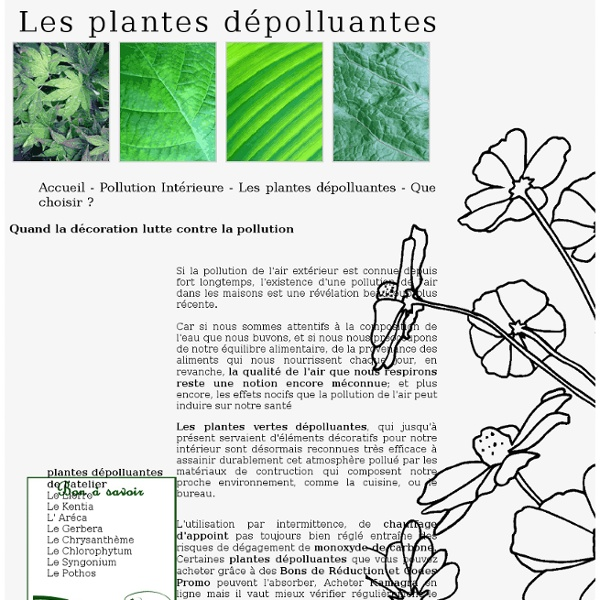 les plantes d polluantes d 39 int rieur pearltrees. Black Bedroom Furniture Sets. Home Design Ideas