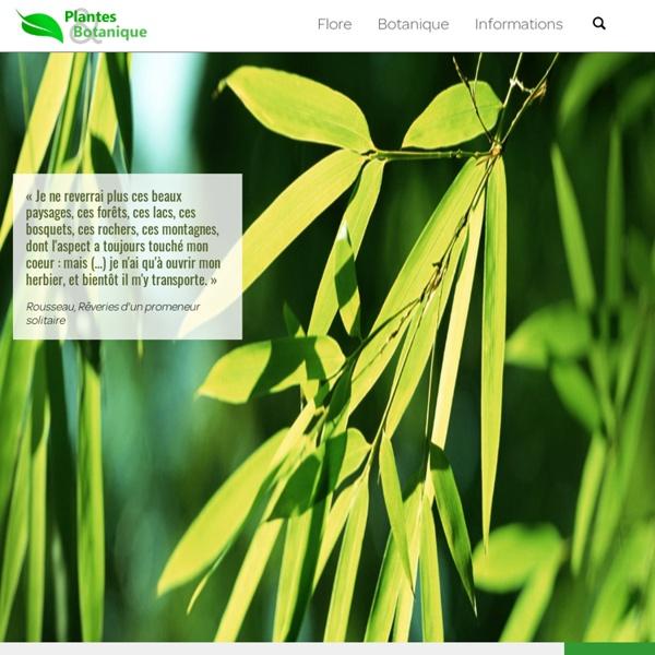 Plantes et botanique
