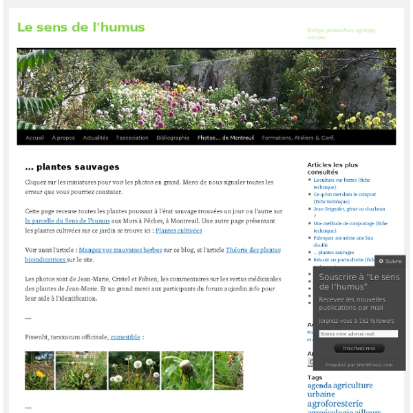 … plantes sauvages