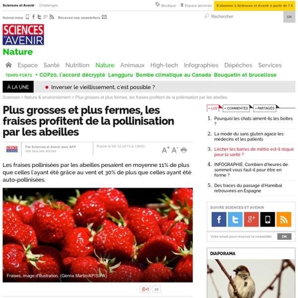 Plus grosses et plus fermes, les fraises profitent de la pollinisation par les abeilles