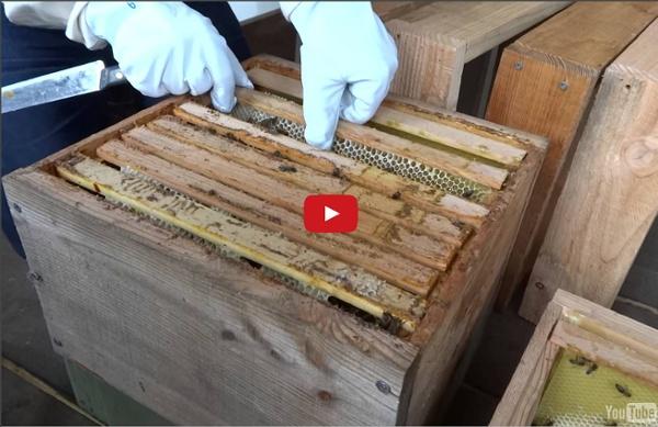 Préparation de nucleus en série sur ruches warré