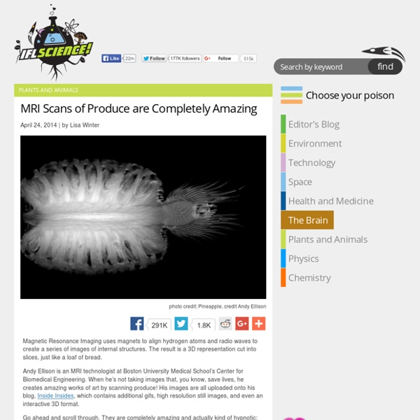 MRI Scans of Produce are Completely Amazing
