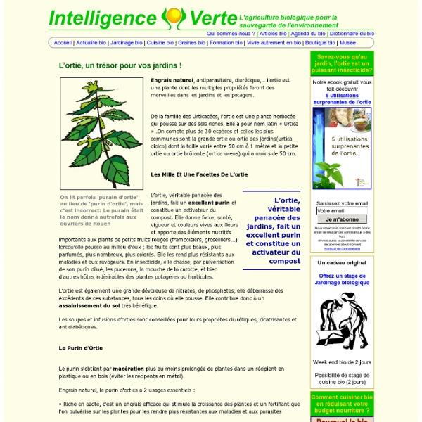 Purin d'ortie: Indispensable pour votre jardin