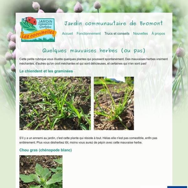 Quelques mauvaises herbes (ou pas) - Jardin Bromont