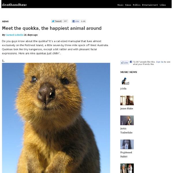 meet the quokka happiest animal around