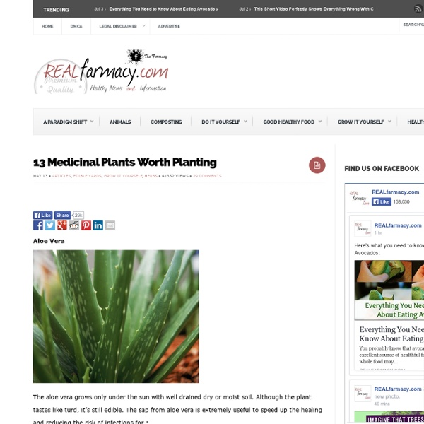 13 Medicinal Plants Worth Planting