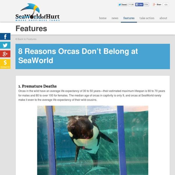 8 Reasons Orcas Don't Belong at SeaWorld