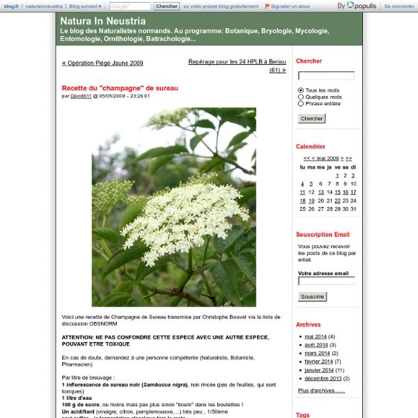 "Recette du ""champagne"" de sureau - Natura In Neustria"