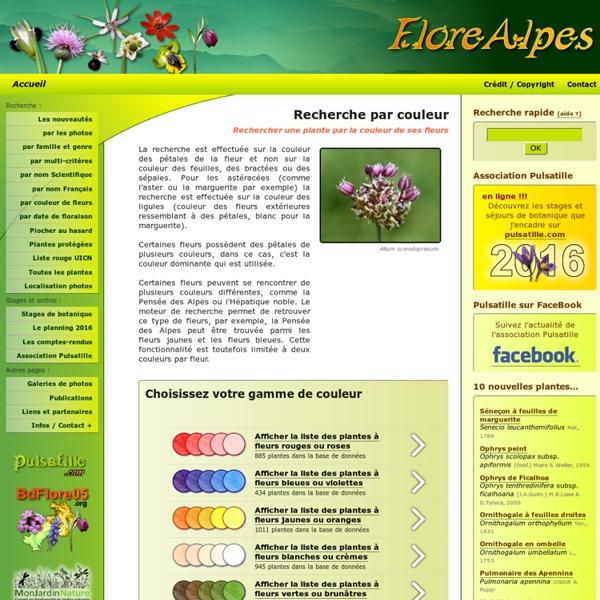Rechercher une plante par la couleur de ses fleurs
