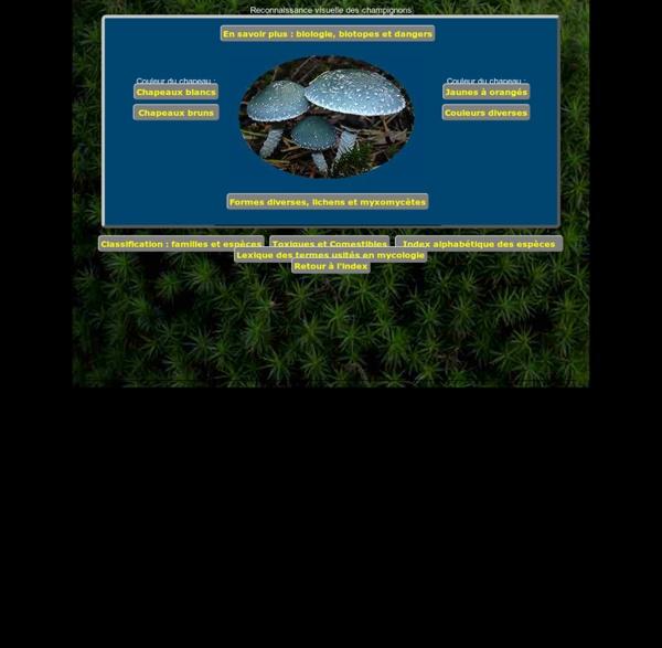 Chercher à reconnaître un champignon : reconnaissance visuelle du champignon parmi 494 fiches descriptives