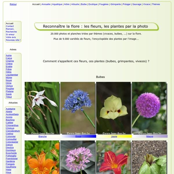 Reconnaître la FLORE (> 15000 photos) 7000 variétés de FLEURS, PLANTES, ARBRES et ARBUSTES
