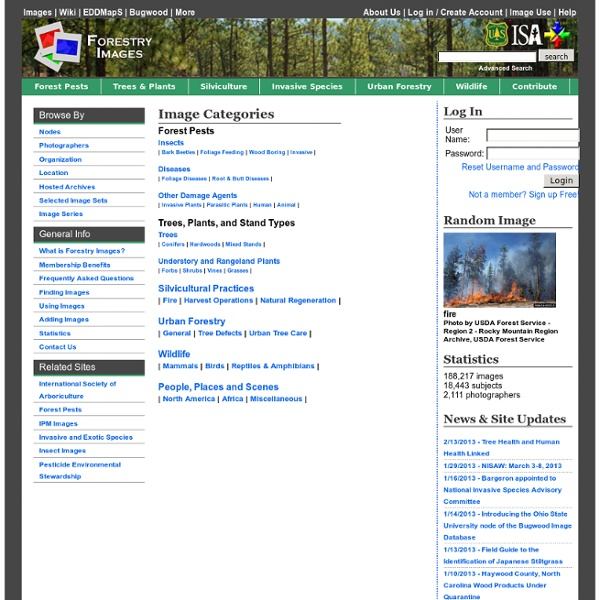 Forestry Images: Forest Health, Natural Resources, Fire, Trees, Wildlife, Silviculture Photos