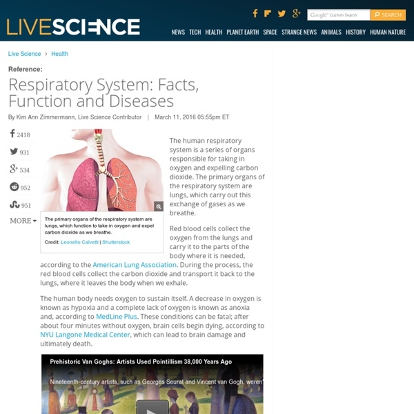Respiratory System Facts Function And Diseases Pearltrees