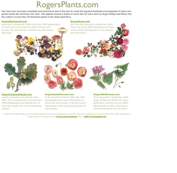 RogersPlants