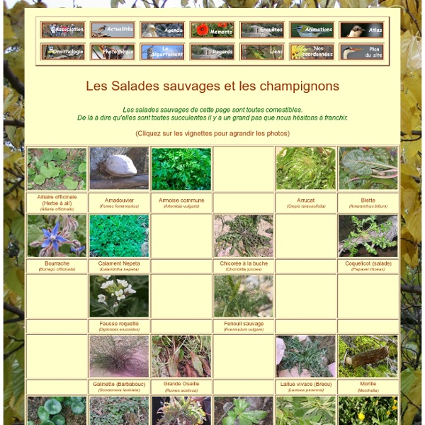 Salades sauvages et Champignons
