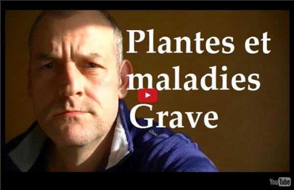 Plantes sauvages comestibles Attention aux Maladies graves