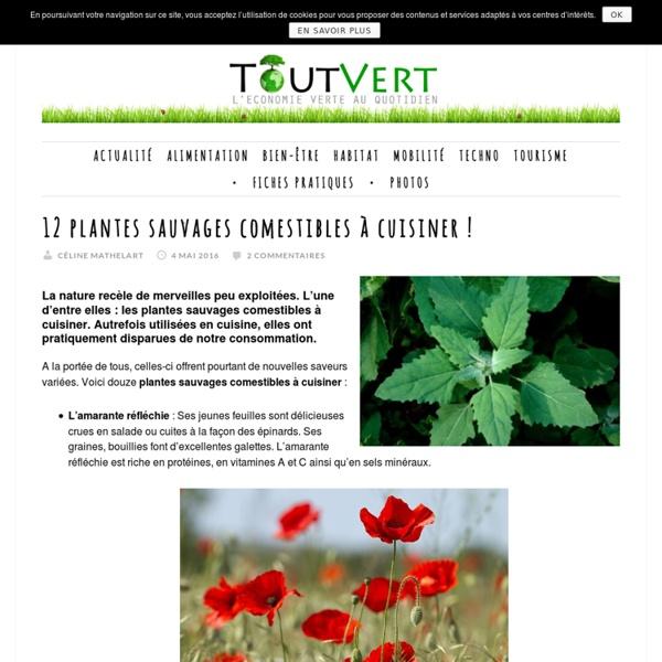 12 plantes sauvages comestibles à cuisiner !