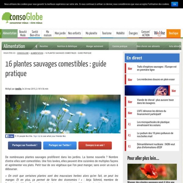 16 plantes sauvages comestibles : guide pratique