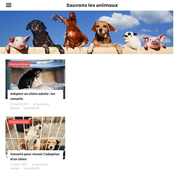 Sauvons les animaux – Tous ensemble pour le bien-être animal