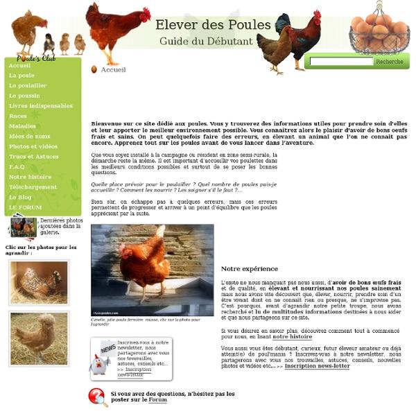 tout savoir sur les poules lever nourrir soigner vos poules pearltrees. Black Bedroom Furniture Sets. Home Design Ideas
