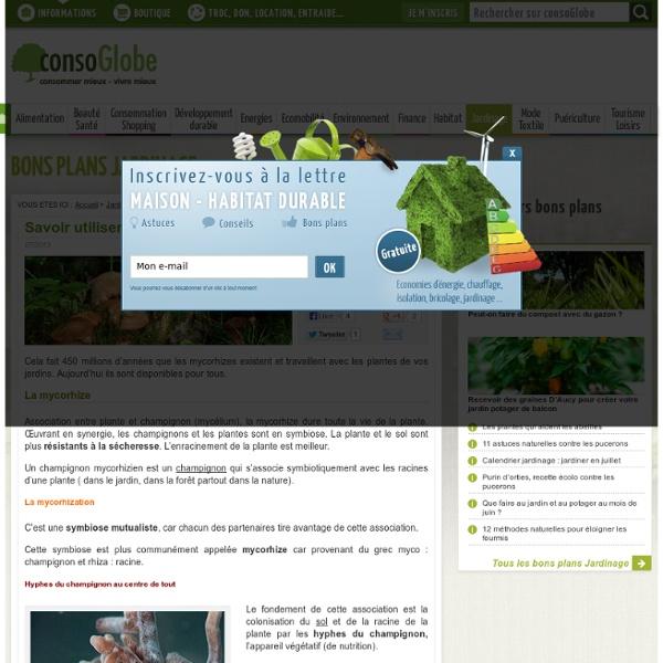 Savoir utiliser les mycorhizes pour votre jardin