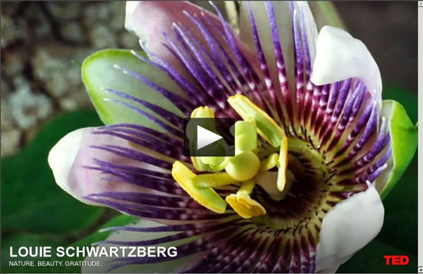 Louie Schwartzberg: Nature. Beauty. Gratitude.