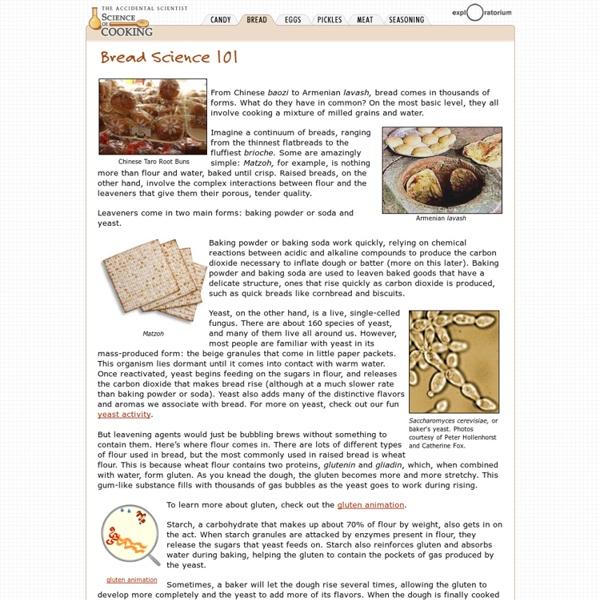 Science of Bread: Bread Science 101