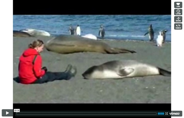 Seal meets girl. Seal falls in love with girl. The end. on Vimeo - StumbleUpon