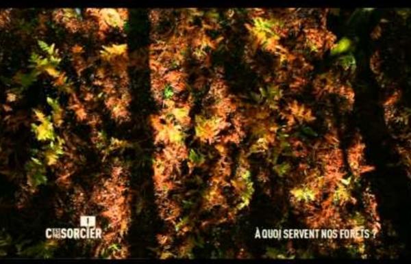 C'est pas sorcier - A quoi servent nos forêts