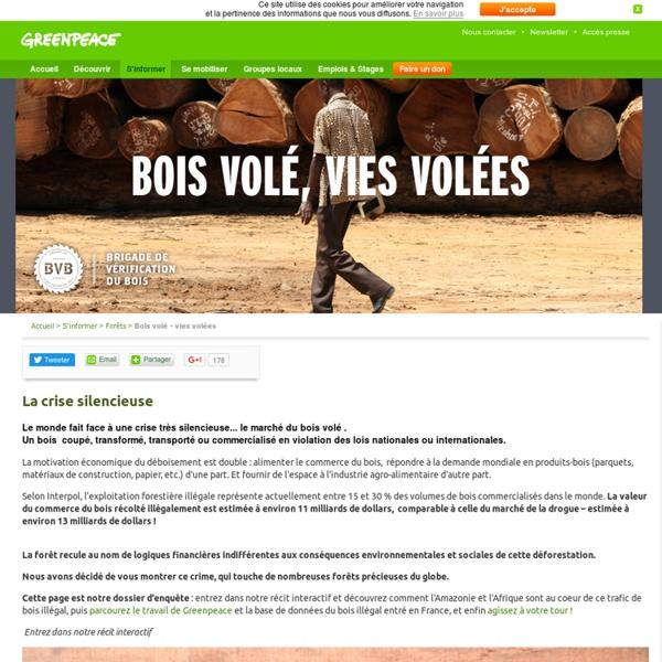 Bois volé - vies volés : la crise silencieuse du trafic de bois