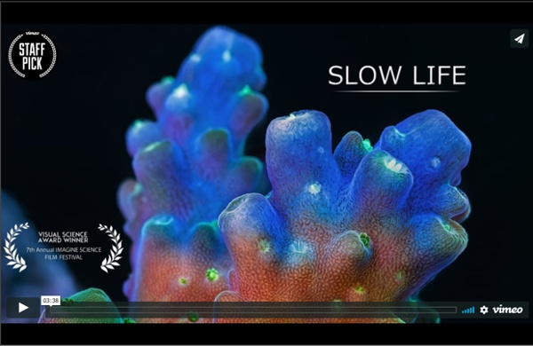 Slow Life in Vimeo Staff Picks