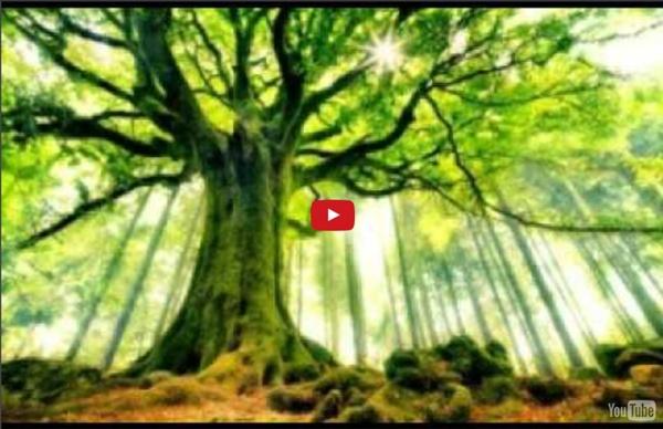 """39'08 Séance guidée """"l'arbre"""" (ancrage)"""