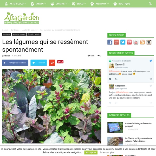 Blog Alsagarden - Plantes Rares, Jardins Naturels & Actualités