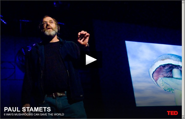 Paul Stamets on 6 ways mushrooms can save the world