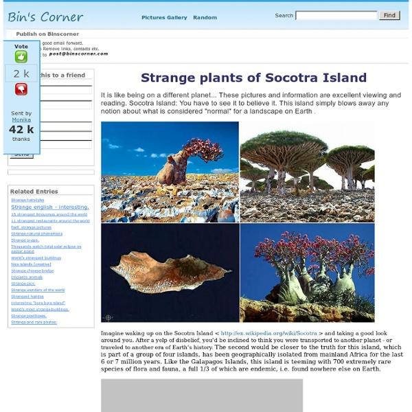 Strange plants of Socotra Island