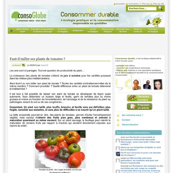 Faut il tailler ses plants de tomates pearltrees - Tailler plant de tomate ...