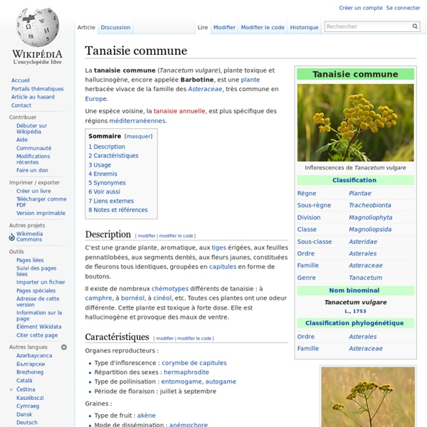 Tanaisie commune mites , puces fourmis punaises
