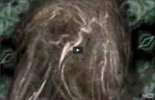 Terence Mckenna - Schizophrenic or Shamanic?