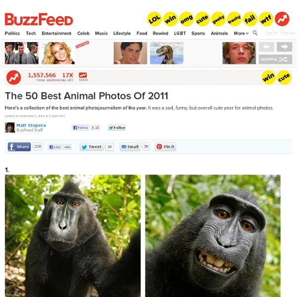 50 Incredible Photos Of Animals From 2011