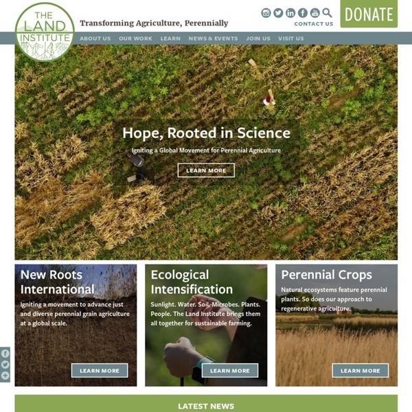 Land Institute : Perrenial Grain